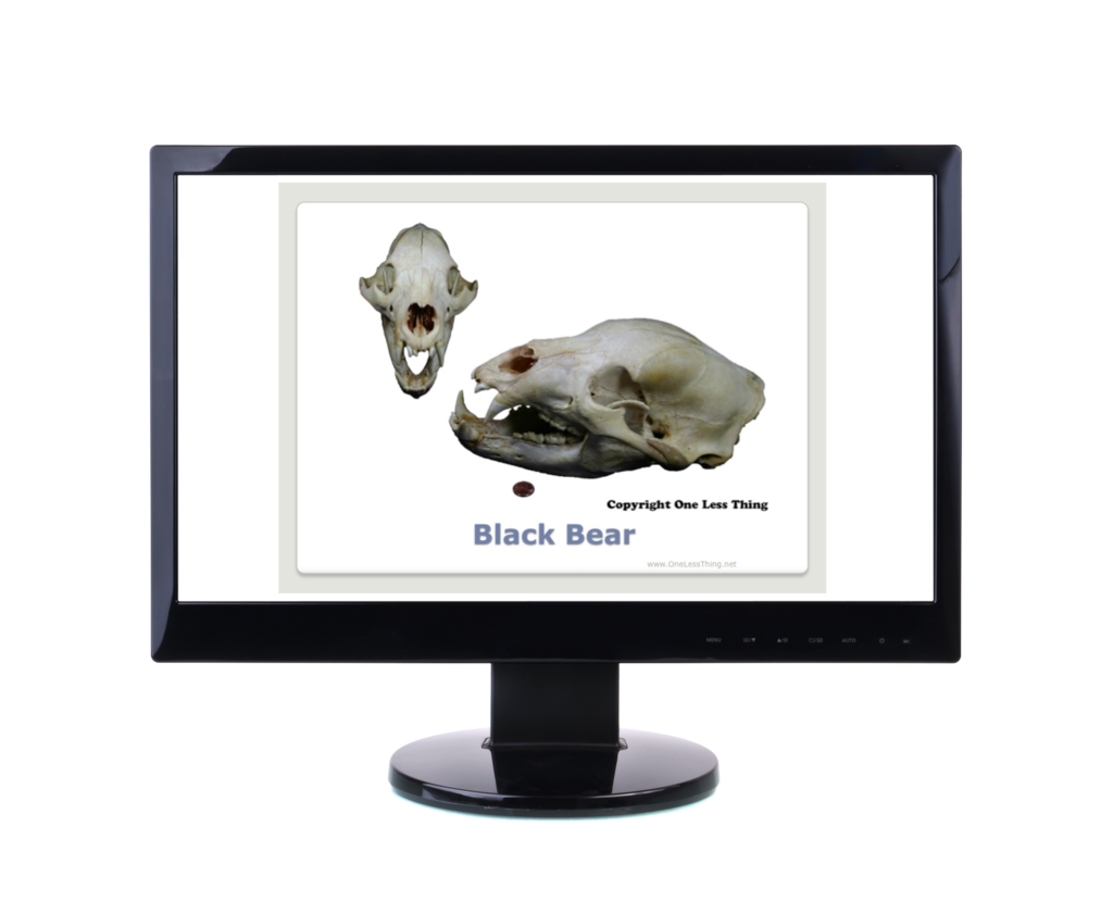 Wildlife 1: Skulls and Furs ID, PowerPoint Downloads