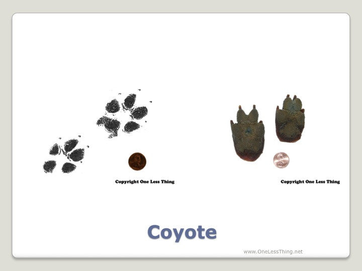 Wildlife 2: Tracks and Prints ID, PowerPoint Downloads