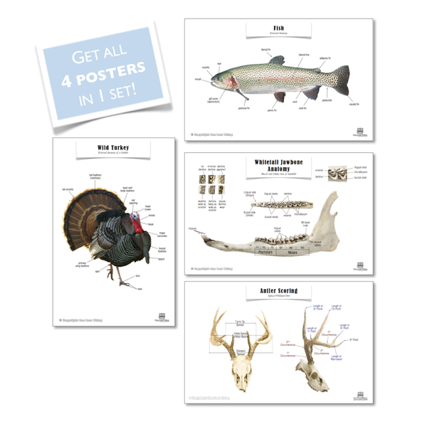 Wildlife Management Posters, Set of 4