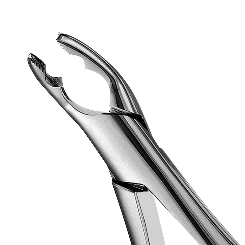 150AS Split Beaks Serrated Upper Incisors & Canines Extraction Forceps