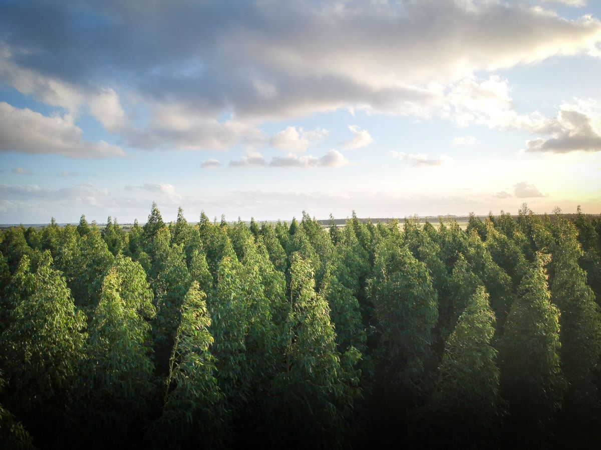 A sprawling forest showing the tops of the trees against the blue sky