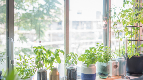 herbs in pots lined on a windowsill with sunlight coming in