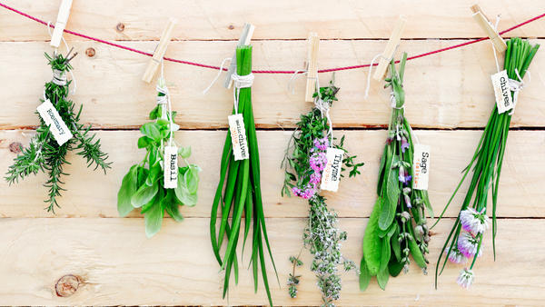 different herbs hanging from a string
