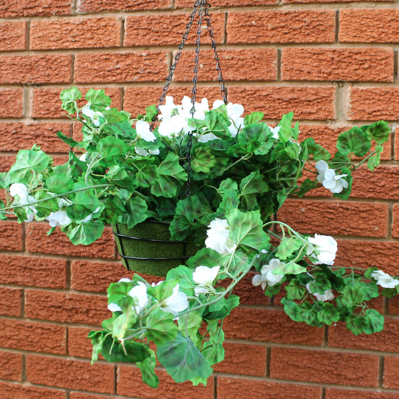 White geraniums plant pot