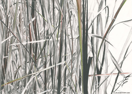 In The Bulrushes