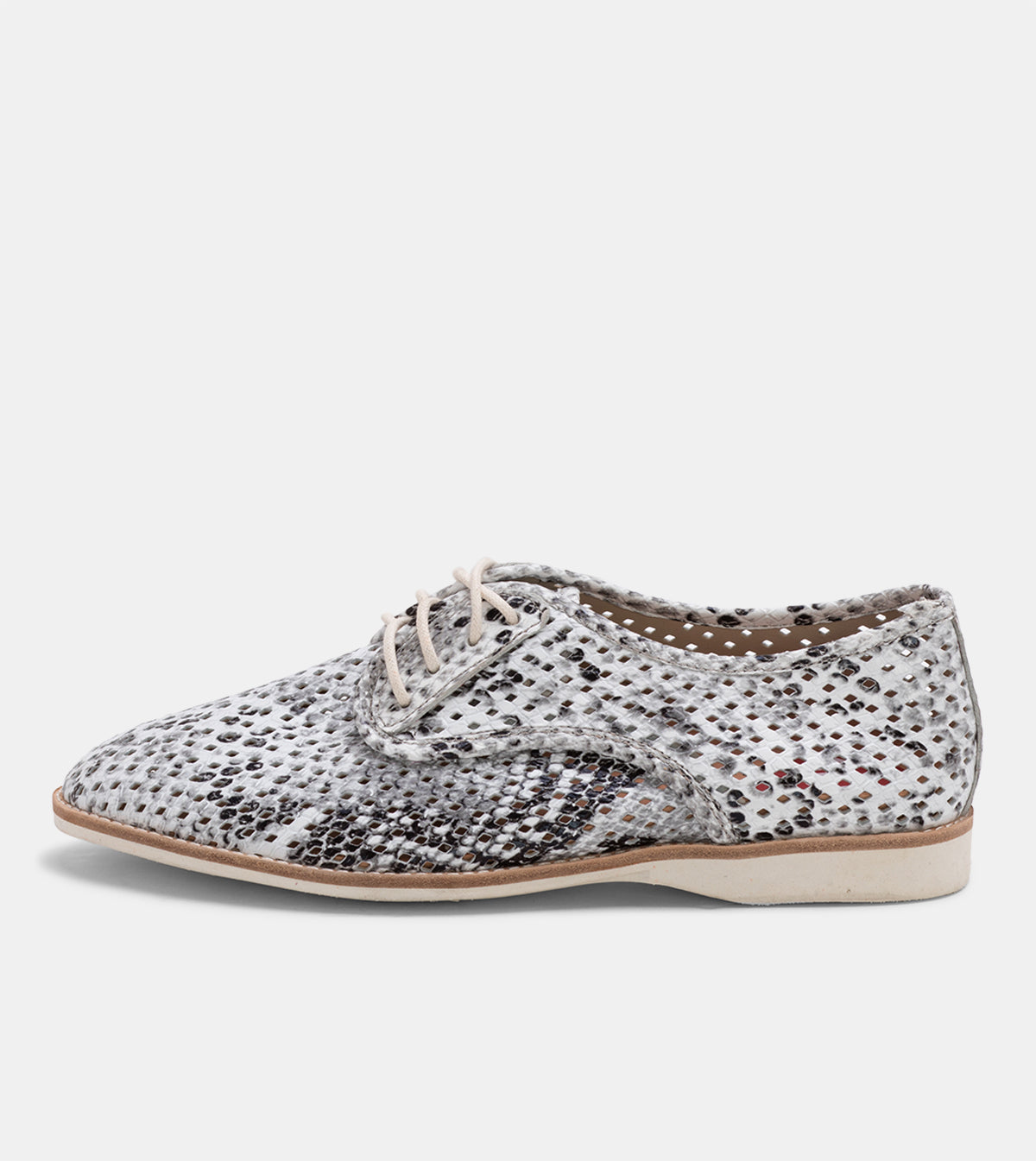 Derby Punch Grey Snake