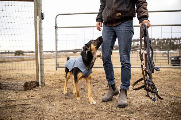 Ruffwear Overcoat Dog Jacket - Idaho Mountain Touring