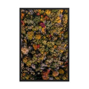 Michigan Fall Colors - Framed