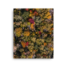 Load image into Gallery viewer, Michigan Fall Colors - Canvas