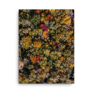 Michigan Fall Colors - Canvas