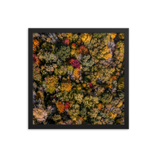 Load image into Gallery viewer, Michigan Fall Colors - Framed