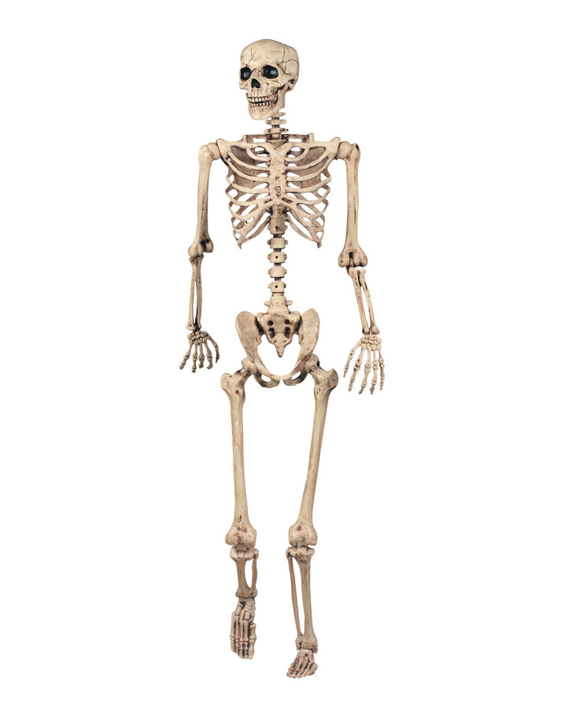 Realistic Skeleton Life Size Party Things Online Party Supplies