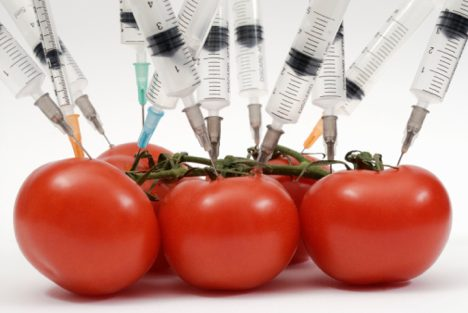 The genetically modified food debate