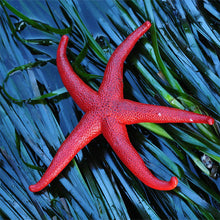 Load image into Gallery viewer, Zen Puzzles - Starfish Teaser