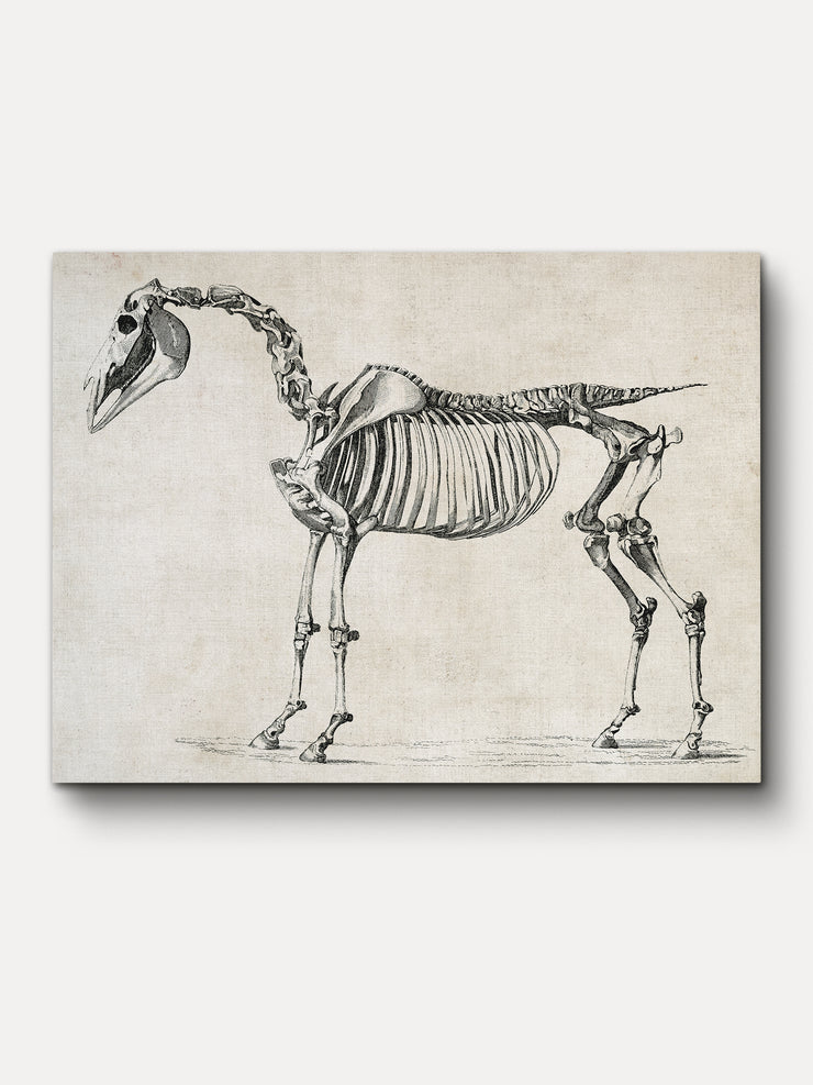 Vintage Horse Skeleton Unframed Canvas Wall Art - iFul