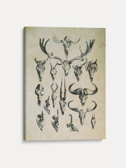 Vintage Skeletal Forms Deer Unframed Canvas Wall Art - iFul