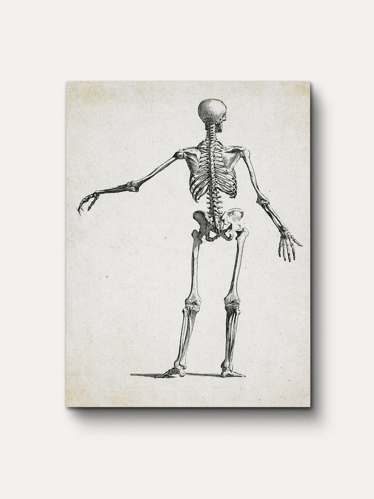 Vintage Human Skeleton Unframed Canvas Wall Art 1 - iFul
