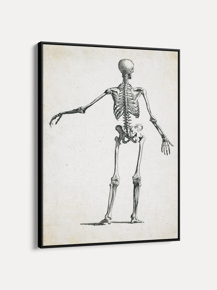 Vintage Human Skeleton Framed Canvas Wall Art 1 - iFul