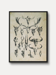 Vintage Skeletal Forms Deer Framed Canvas Wall Art - iFul