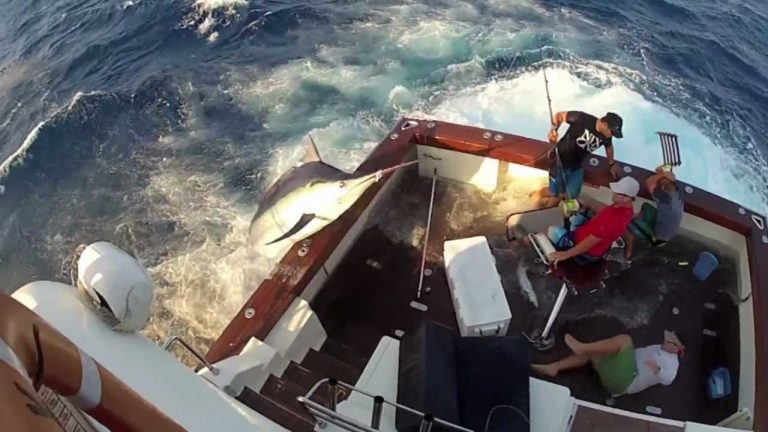 600 Pound Marlin Jumps In Boat!