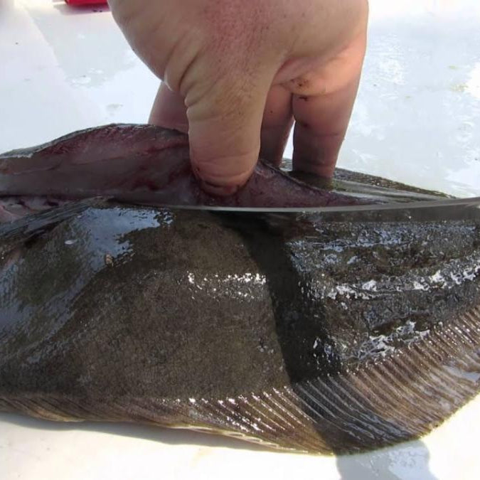 Fast and Easy Steps To Cleaning a Flounder