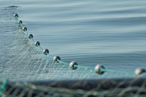 Marine Fisheries Commission Wants More Input on Modifying Small Mesh Gill Net Rules
