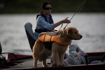 Tips for Taking Your Dog Boating