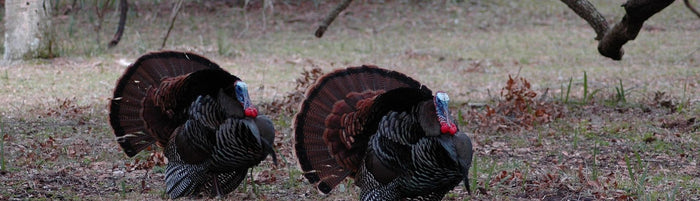 turkey hunting in NC