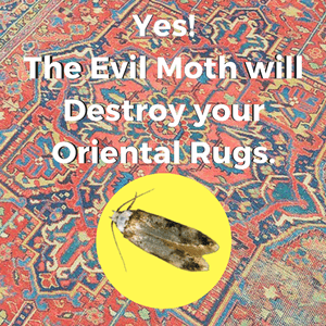 Yes. The Evil Moth Will Destroy Your Oriental Rugs