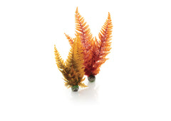 biOrb Autumn Fern - 2 Set
