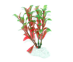 AquarWorld Red Bacopa 10cm