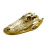 Gold Alligator Skull