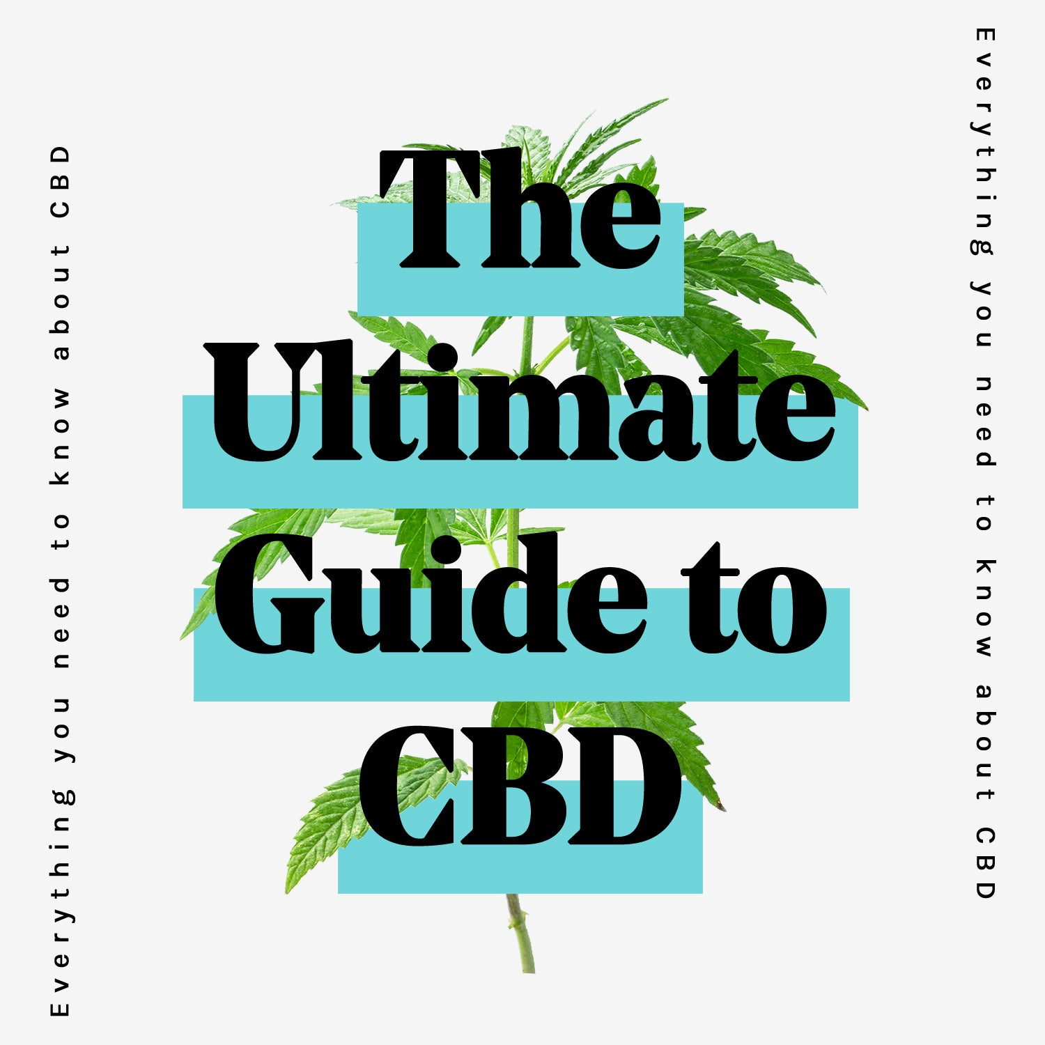 The beginner's guide to CBD - Good Soul CBD presents the ultimate cbd guide