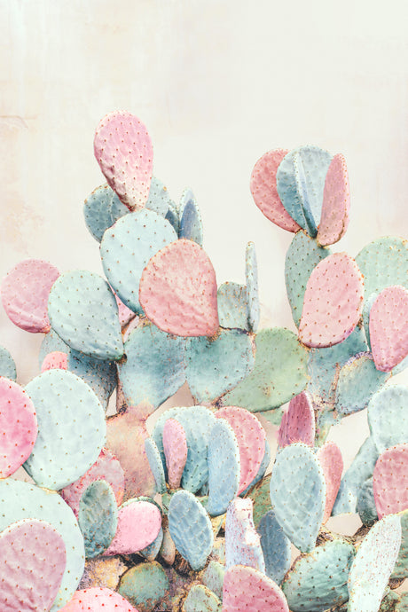 Pink and Blue Cactus
