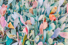 Load image into Gallery viewer, Multicolored Cactus Horizontal