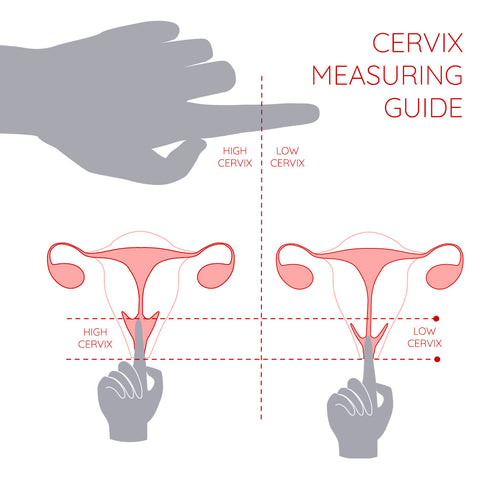cervix measuring guide