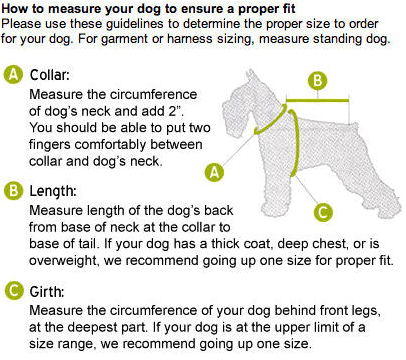 How to measure your dog for a coat/jacket