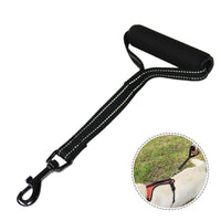Short Leash with Traffic Handle
