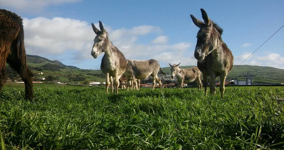 IN STOCK NOW! Donkey Milk from Azores Islands: USDA organic, freeze dried, pasteurized, shipped to your door!