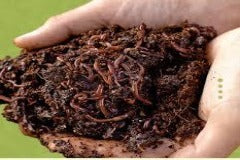 Live Worms For Composting-European Worms-Great for Fishing