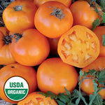Seed Savers Exchange - Nebraska Wedding Tomato