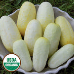 Seed Savers Exchange - Boothby' Blonde Cucumber