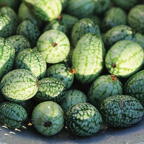 Seed Savers Exchange - Mexican Sour Gherkin (Cuke Nuts)