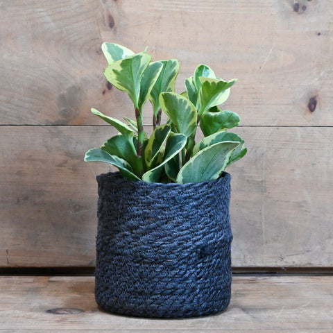 Houseplant & Basket Gift Set