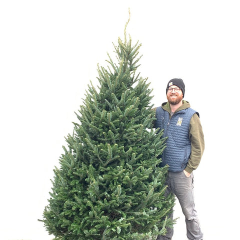 North Carolina Premium Fraser Fir (local delivery available)