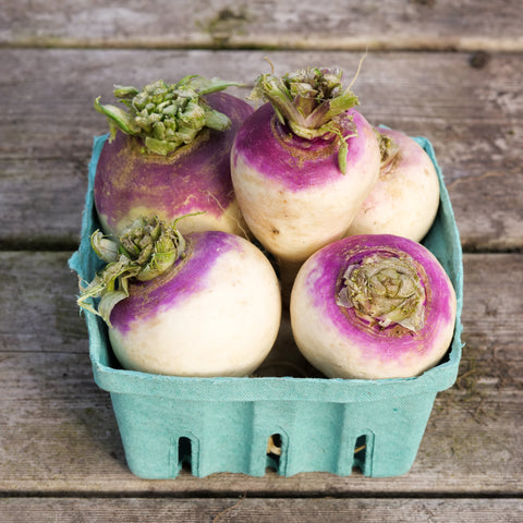 Turnip - Purple Top