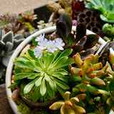 Gather & Plant: Fall Succulent Centerpiece Workshop 9/26