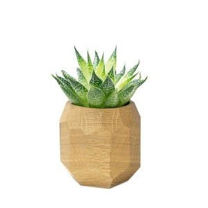 Hardwood Geometric Planter