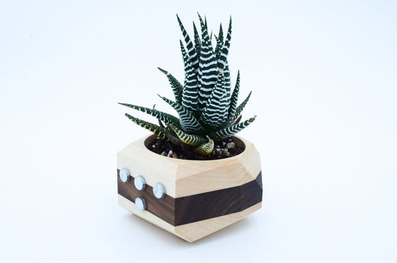 Magnetic Walnut & Maple Geometric Planter - Hailey Home