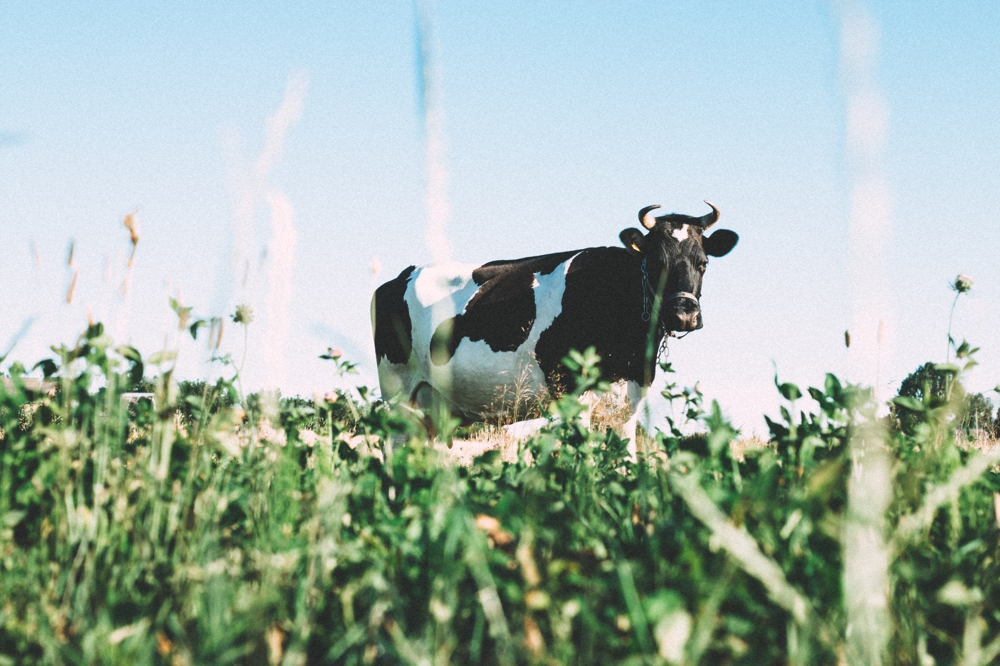 Nutritional properties of Grass-Fed Whey: Omega 3